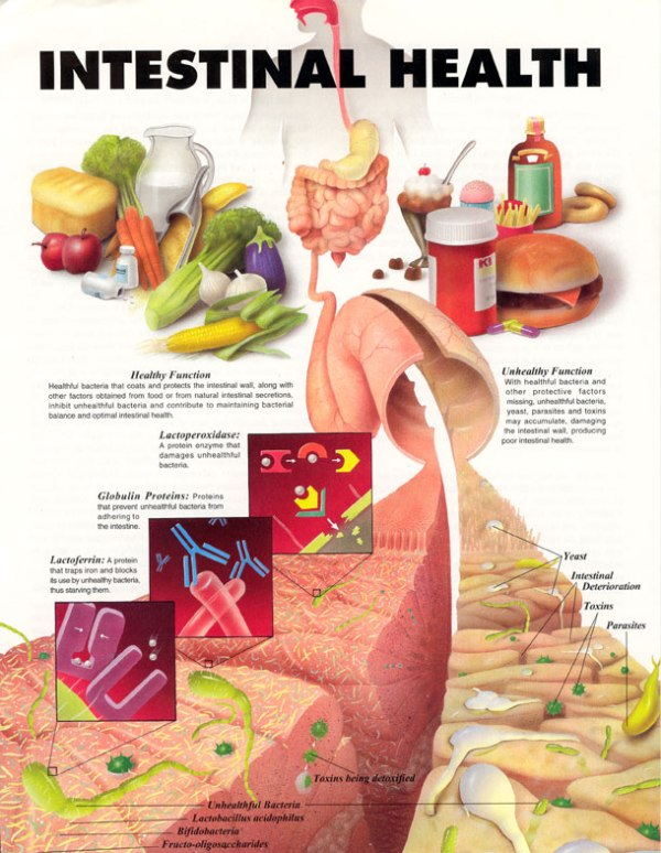 intestinal_gut_health